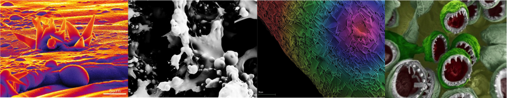Natural Polymers and Photonics Group